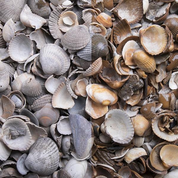 Muscheln Zierkies trockener und nasser Zustand